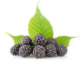 Ripe blackberry with green leaf — Stock Photo