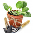Stock Photo: Plant in pot with implement