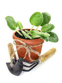 Plant in pot with implement — Stock Photo