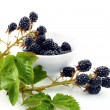 Blackberry berries on branch with green leaves — стоковое фото #7995035