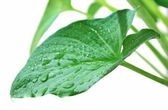 Leaf in drop dew — Stock Photo