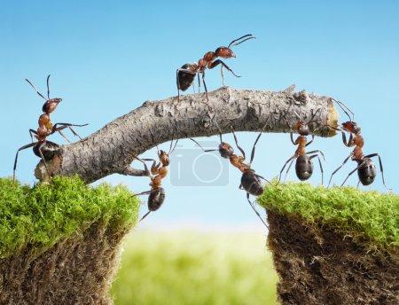 Team of ants constructing bridge, teamwork