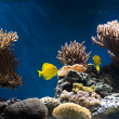 thumbnail of Aquarium with fish and corals