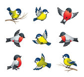 Pretty winter birds: tits and bullfinches EPS8 vector format