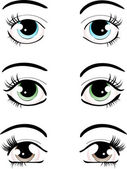 Set of different shaped female eyes and brows