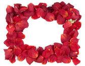 Rahmen aus roten Rosenblüten