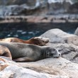 thumbnail of Sea lion sleeping
