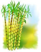 Rostlina z cukrové třtiny
