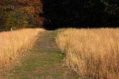 Naučná stezka ve vysoké trávě