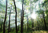Sunny forest.
