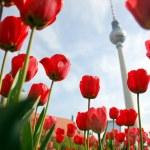 thumbnail of TV Tower, Berlin