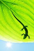 Silueta ještěrka na zelený list