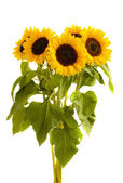 Bight sunflowers bouquet