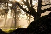 Autumn morning mist in the park