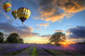 Hot air balloons flying over lavender landscape sunset