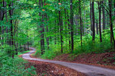 Green forest with pathway