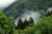Paesaggio della foresta nera