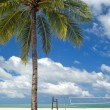 thumbnail of Palm Tree Beach