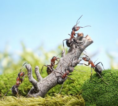 Team of ants and weathered tree, teamwork concept