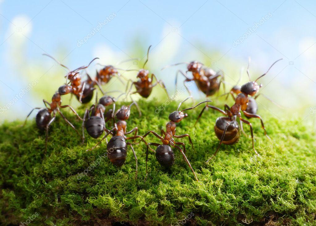 Team of ants, dance of hunters