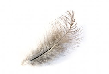 Feather isolated on white background stock vector