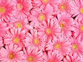 pozadí květu