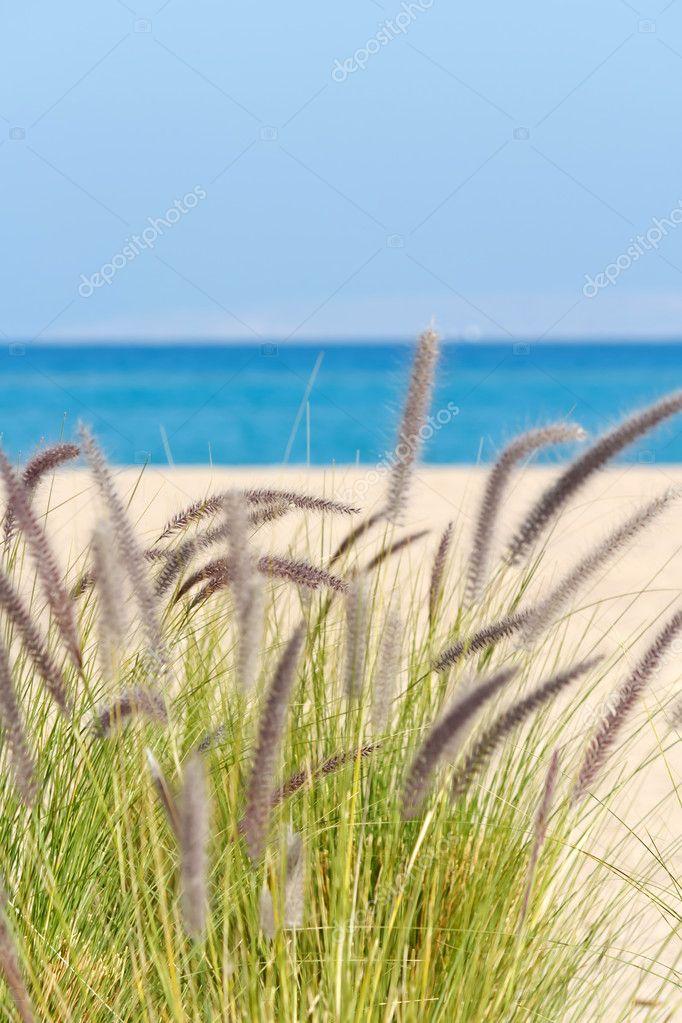 Sea grasses on sand