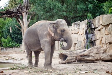 African elephant stock vector