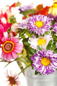 barevné letní květiny