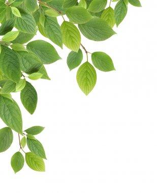 "Картина, постер, плакат, фотообои ""граница зелёных листьев"", артикул 6938110"