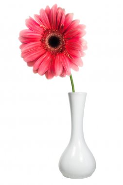 Pink flower in a white vase
