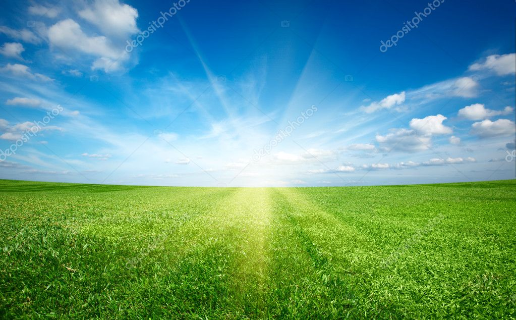 grass field sunset. Grass Field Sunset. Sunset Sun And Of Green Fresh Under Blue Sky \\ A