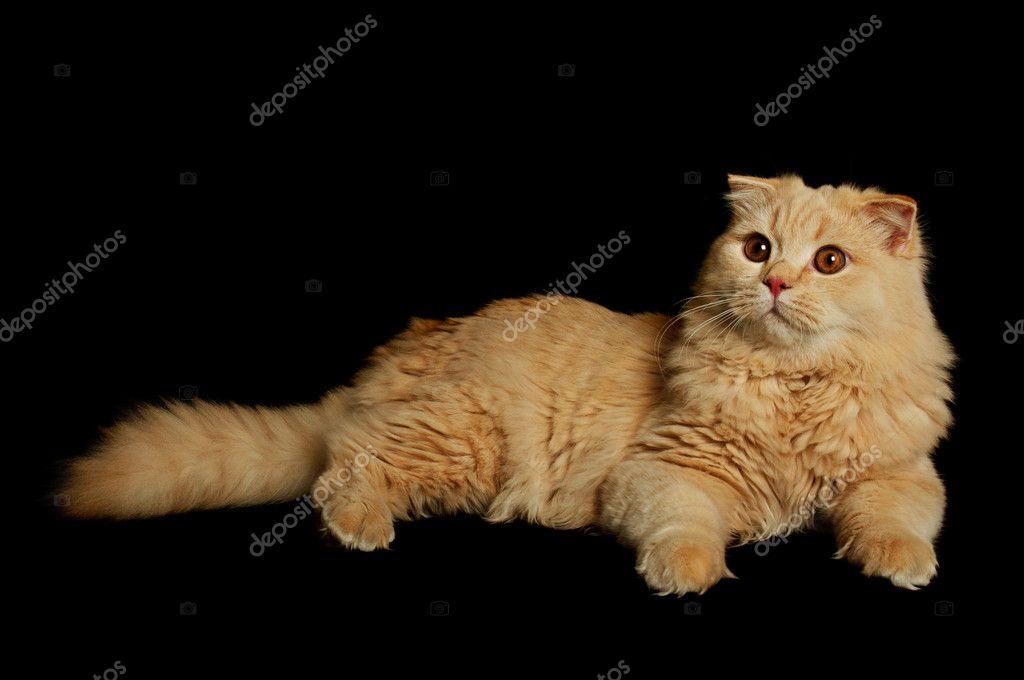jeune chatte noire crémeuse femelle porno tube