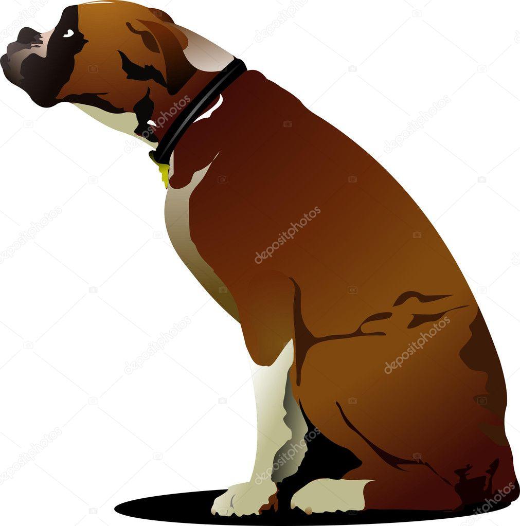 Boxer Dog Sitting Clipart Free