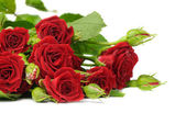 Fotografie Roses isolated on white
