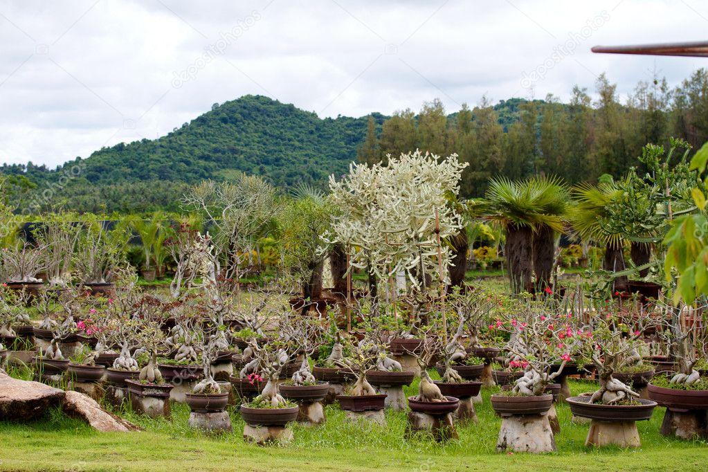 Nongnooch Tropical Botanical Garden, Pattaya — Stock Photo