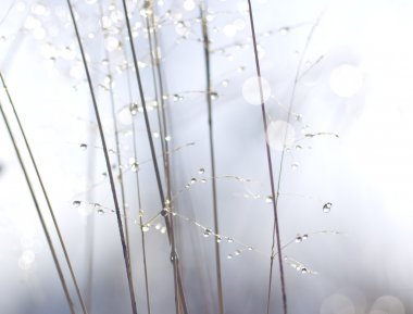 Water drops on plant stems.