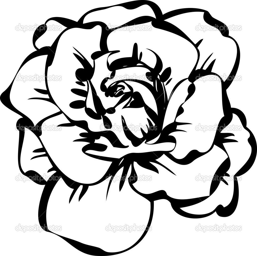 Розы рисунок чёрно белый