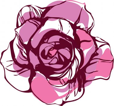 Picture of nature pink tea rose