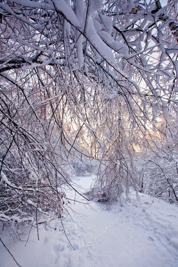 Фотообои Winter park