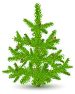 Christmas fur-tree on white