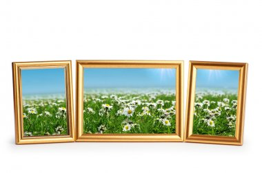 Daisy flowers in the picture frames on white