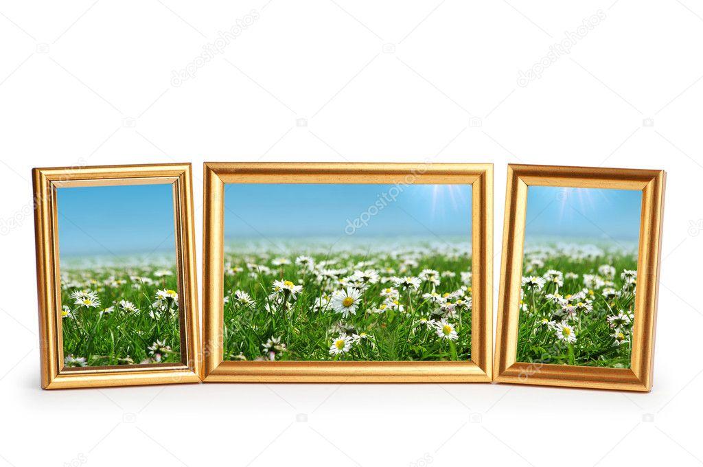 flores de Margarita en los marcos de cuadros en blanco — Fotos de ...