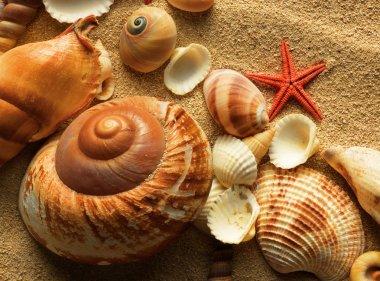"""Картина, постер, плакат, фотообои """"морская раковина на песке постеры печать картины модульные города"""", артикул 7544163"""