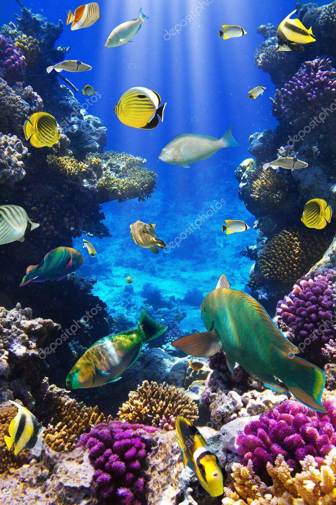 Фотообои Coral colony and coral fish
