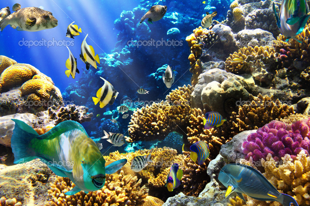 Фотообои Coral colony and coral fish