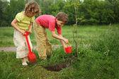 Fotografie jungen und Mädchen Pflanze Baum