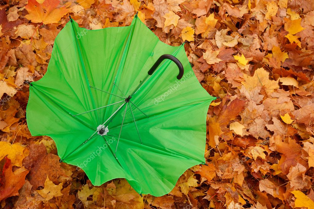 Umbrellas in autumn park