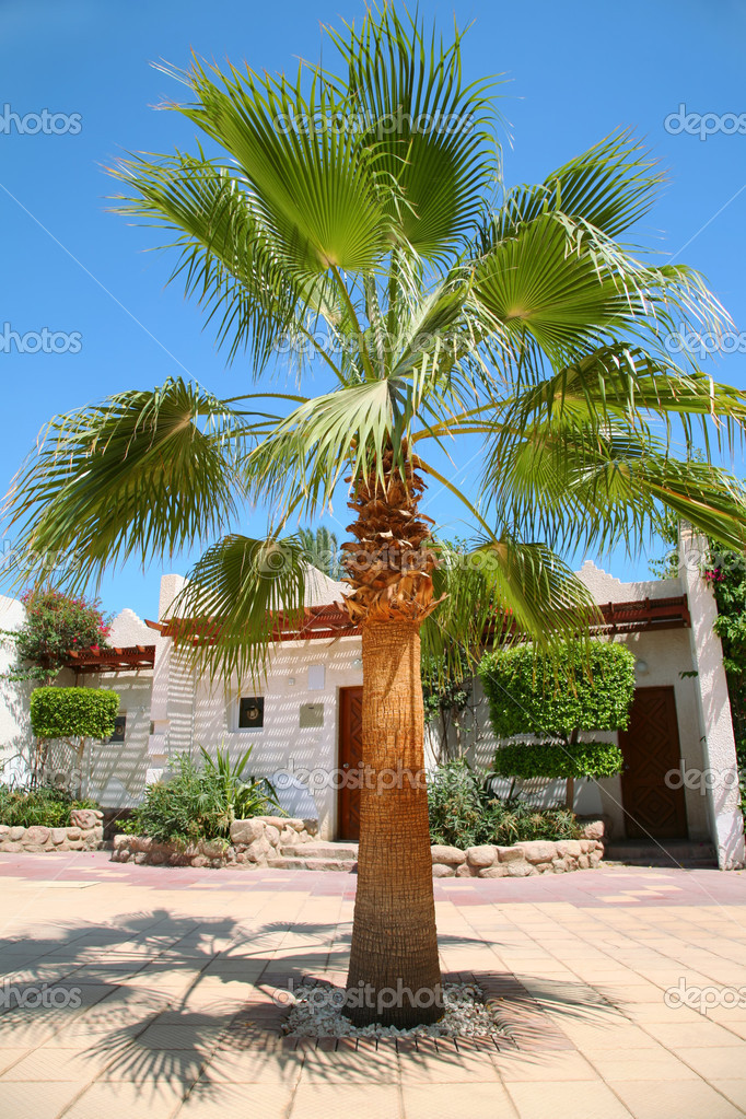 House tropical palm