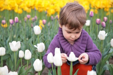 Little girl looks on white tulip